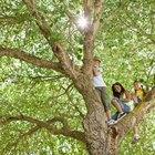 Como fazer uma fantasia de árvore para crianças