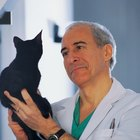 Recommendations for AVMA Vaccinations for Cats