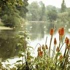 O ecossistema de uma lagoa de água doce