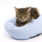 Bed Bug Treatment for Cats