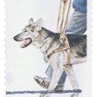 Cómo obtener una certificación para tener un perro de asistencia
