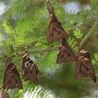 Como transformar em adubo as fezes de morcego