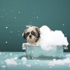 Recipe for a Natural Dog Shampoo That Won't Strip Natural Oils