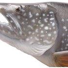 O que fazer com um peixe de aquário com um diagnóstico de guelras avermelhadas