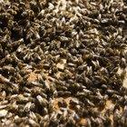 Cómo reaccionar ante un enjambre de abejas