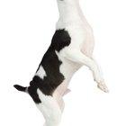 Cómo tratar el estreñimiento de los perros naturalmente