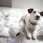 How to Keep a Dog From Chewing Toilet Paper