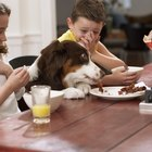 Table Food Diets for Saint Bernards