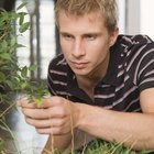 O que causa pontos pretos e áreas mortas na ponta das folhas de plantas dentro de casa?