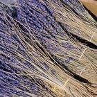 Cómo recoger y deshidratar flores de lavanda