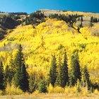 Senderismo en Conifer, Colorado