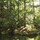 ¿Qué es un bosque templado?