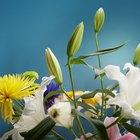 Cómo conseguir que los botones de las flores frescas se abran
