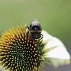 Cómo deshacerse de las abejas de tu patio trasero