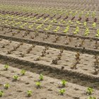 Etapas de preparación de la tierra para sembrar