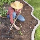 Receita de herbicida natural