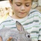 ¿Qué tipos de conejos son buenos para criar con niños pequeños?