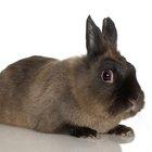 Como evitar a queda de pelos em coelhos