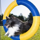 Easy to Make Play Equipment for Dogs