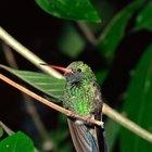 Cómo preparar néctar para colibrí