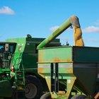 Variedades de sorgo de grano