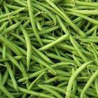 Las partes de la semilla de la planta del frijol y sus funciones