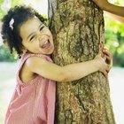 Cómo hacer crecer un árbol de sauce que llora utilizando una rama