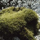 What pH Is Recommended for Aquarium Moss?