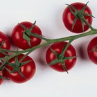 Cómo podar plantas de tomate para aumentar la producción de frutas
