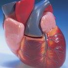 Alimentação para reverter a calcificação cardíaca