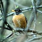 Una lista de aves del bosque