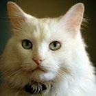 Que mamíferos matam gatos?