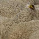 Cómo construir un refugio para ovejas