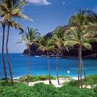 Consejos para pescar desde las costas de Oahu