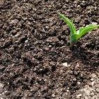 Como fazer seu próprio gel para plantas em desenvolvimento