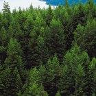 Quais são algumas das vantagens e desvantagens do desmatamento?