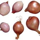 Cómo sustituir una cebolla con un chalote