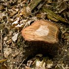 How to Drill a Tree Stump