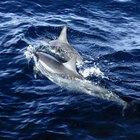¿Cómo se adaptan los delfines a su hábitat?