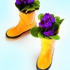 Cómo propagar y cuidar violetas africanas