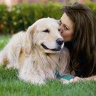 Cómo cuidar a un perro con un resfriado