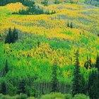 Guía vacacional para los parques estatales de Colorado