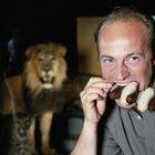 ¿Cómo ser propietario de un león como mascota?