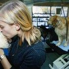 Hinchazón e infección de la glándula mamaria en perros