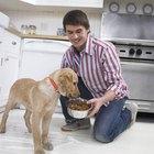 Quais alimentos que contêm glucosamina eu posso dar ao meu cão?