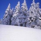 Cómo usar guata para hacer que tu árbol de Navidad parezca tener nieve