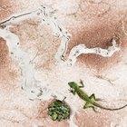 Ideas para proyectos con animales del desierto