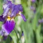 Qual é a parte masculina de uma flor?