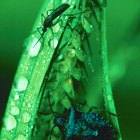 Cómo repeler los insectos naturalmente con vitamina B