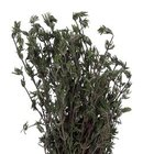Many gardeners favor rosemary for its fragrance and minimal care requirements.